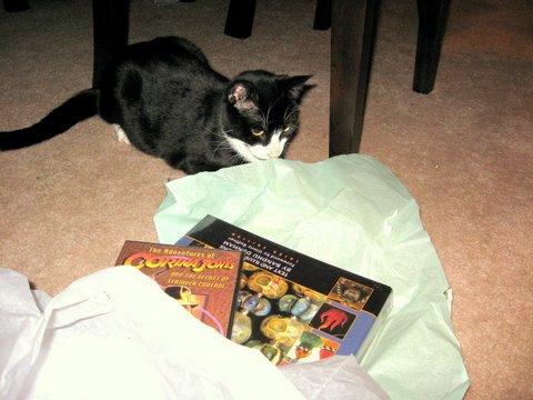 gratuitous kittenshot